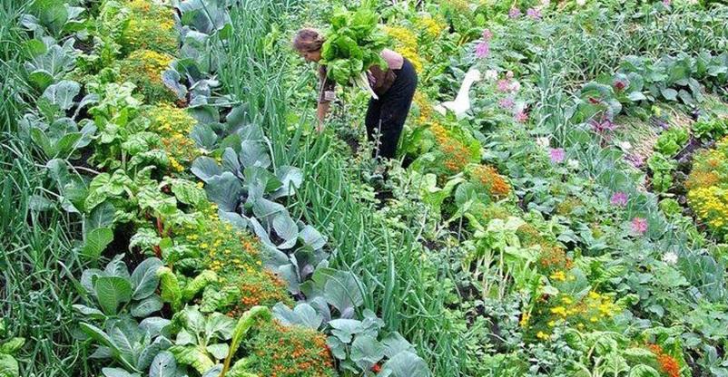 Plant Perception