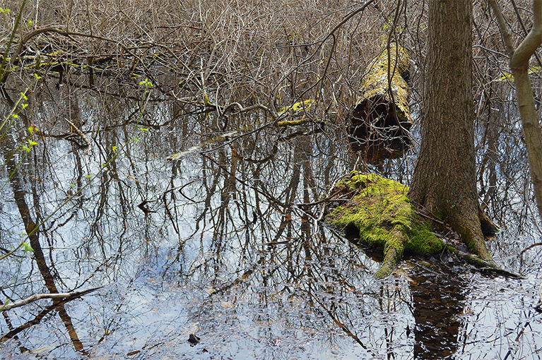 Spring and Vernal Pools