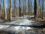 Where are Ohio's Vernal Pool Amphibians in Winter?