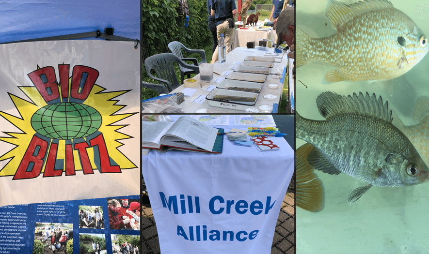 BioBlitz on the Mill Creek hosted by Mill Creek Alliance