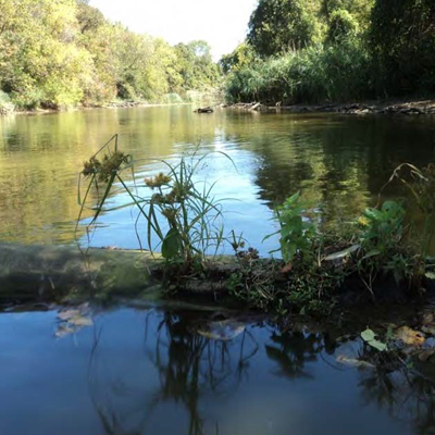 Assessment of the Fish Assemblages and Habitat Quality in the Lower Black River 2010-2012: Lacustuary Portion in Lorain, OH