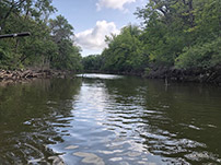 Biological and Water Quality Assessment of Upper Des Plaines River: Year 2 Rotation 2018